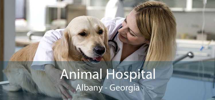 Animal Hospital Albany - Georgia