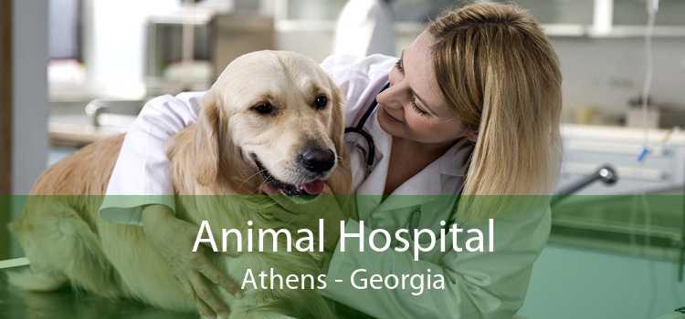 Animal Hospital Athens - Georgia
