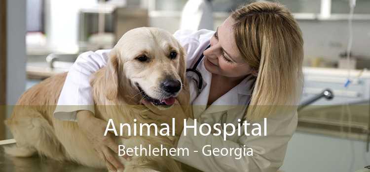 Animal Hospital Bethlehem - Georgia