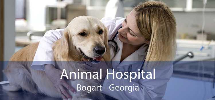 Animal Hospital Bogart - Georgia