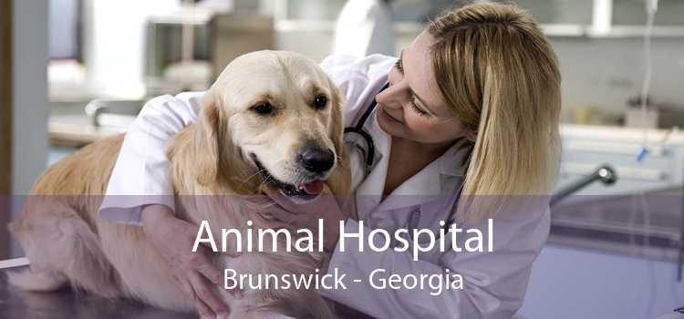 Animal Hospital Brunswick - Georgia