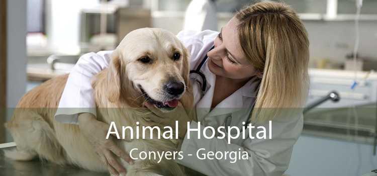 Animal Hospital Conyers - Georgia