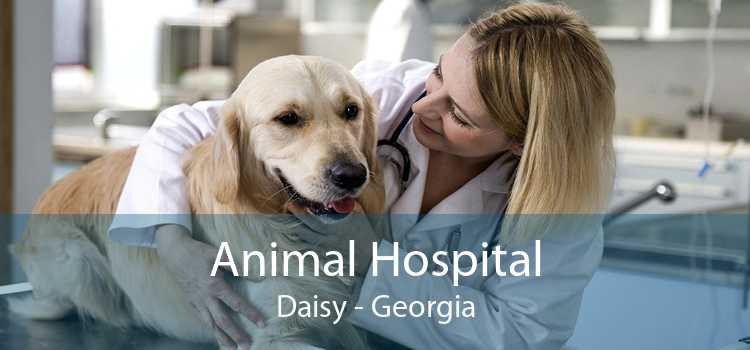 Animal Hospital Daisy - Georgia