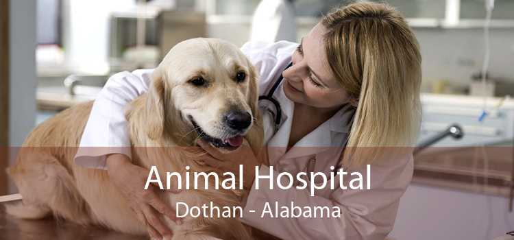 Animal Hospital Dothan - Alabama