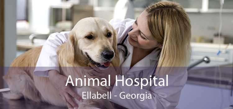 Animal Hospital Ellabell - Georgia