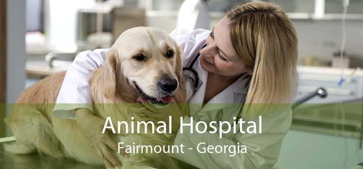 Animal Hospital Fairmount - Georgia