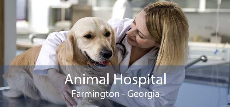 Animal Hospital Farmington - Georgia