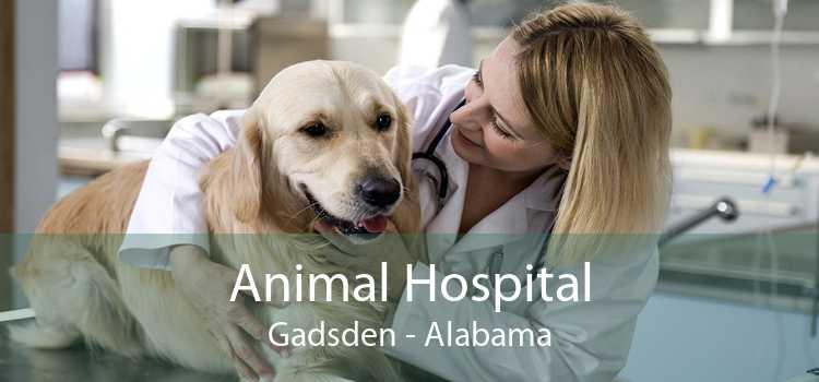Animal Hospital Gadsden - Alabama