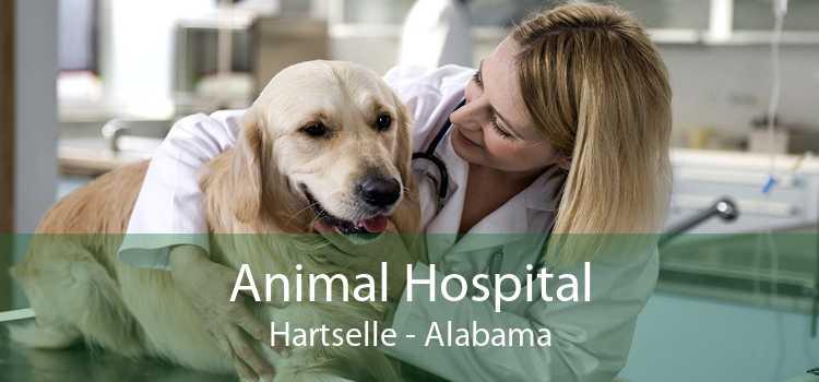 Animal Hospital Hartselle - Alabama