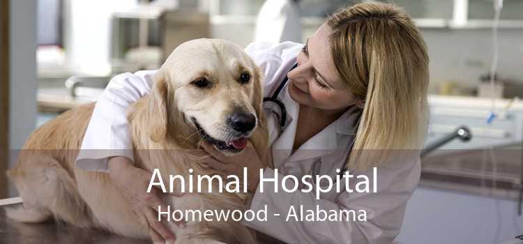 Animal Hospital Homewood - Alabama
