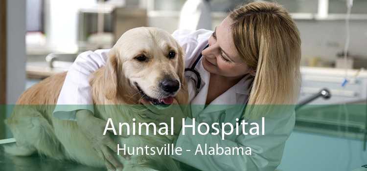 Animal Hospital Huntsville - Alabama