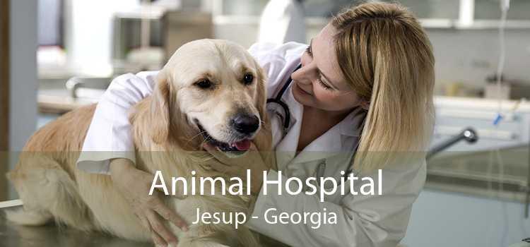 Animal Hospital Jesup - Georgia