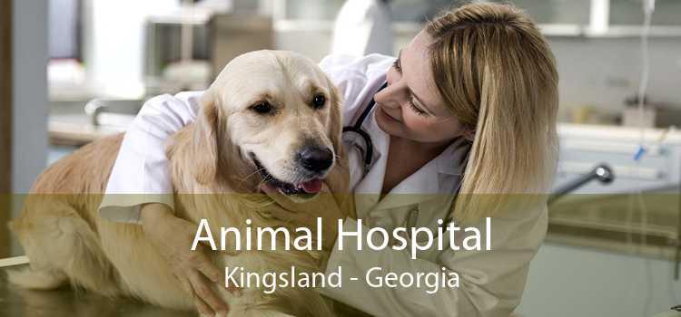 Animal Hospital Kingsland - Georgia