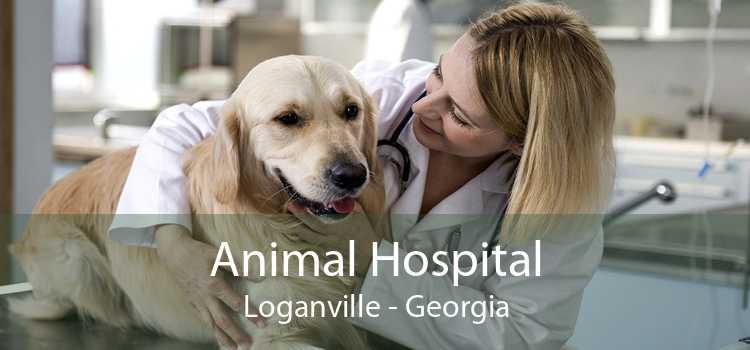 Animal Hospital Loganville - Georgia