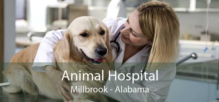 Animal Hospital Millbrook - Alabama