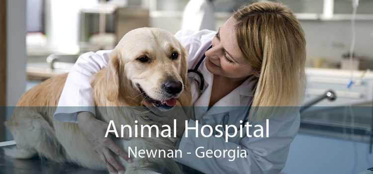 Animal Hospital Newnan - Georgia