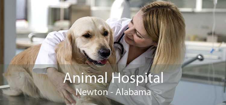 Animal Hospital Newton - Alabama