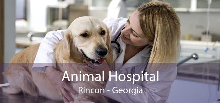 Animal Hospital Rincon - Georgia