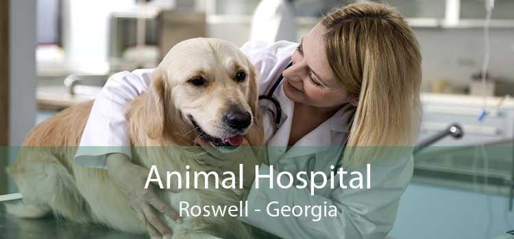 Animal Hospital Roswell - Georgia