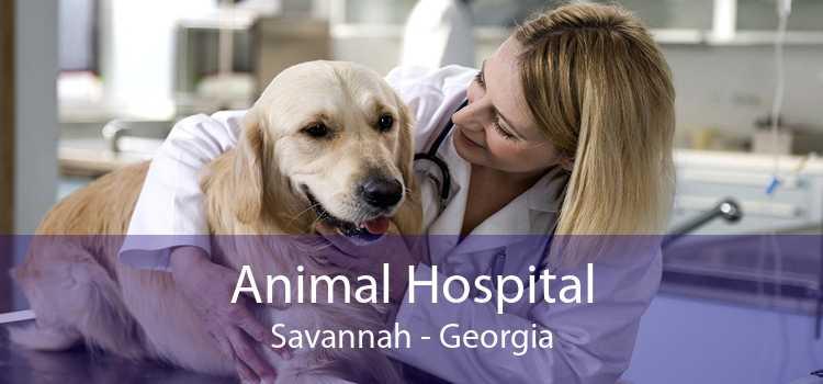 Animal Hospital Savannah - Georgia