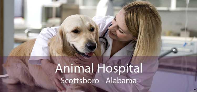 Animal Hospital Scottsboro - Alabama