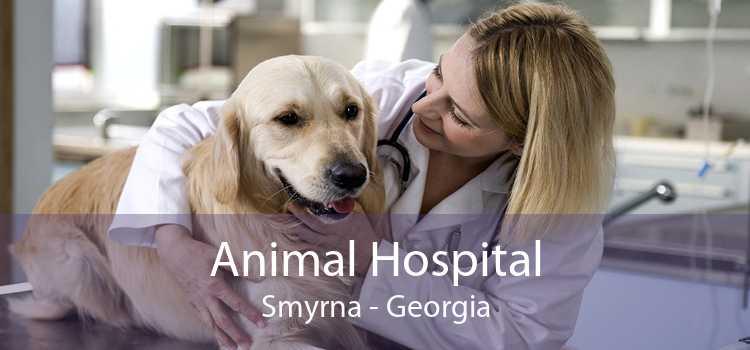 Animal Hospital Smyrna - Georgia