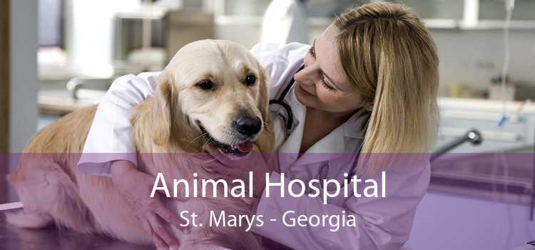 Animal Hospital St. Marys - Georgia