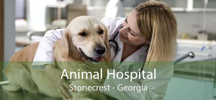 Animal Hospital Stonecrest - Georgia
