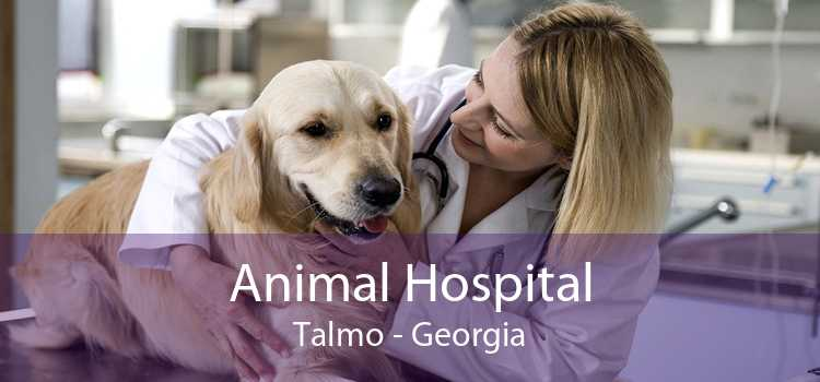 Animal Hospital Talmo - Georgia
