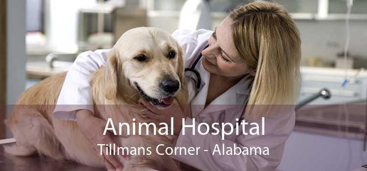 Animal Hospital Tillmans Corner - Alabama