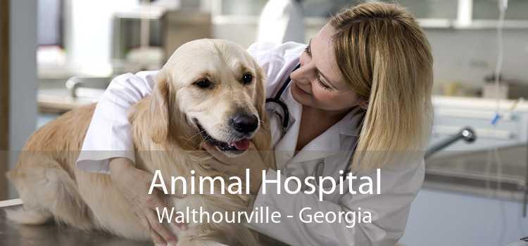Animal Hospital Walthourville - Georgia