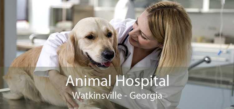 Animal Hospital Watkinsville - Georgia