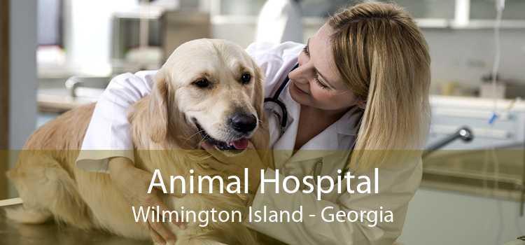 Animal Hospital Wilmington Island - Georgia