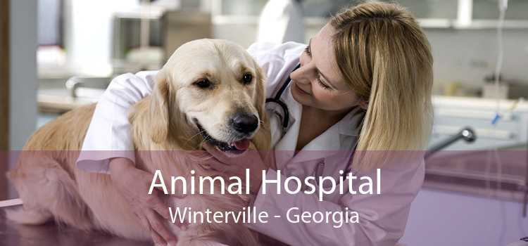 Animal Hospital Winterville - Georgia