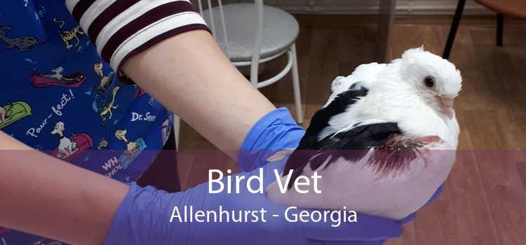 Bird Vet Allenhurst - Georgia
