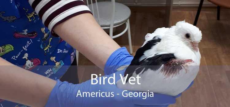 Bird Vet Americus - Georgia