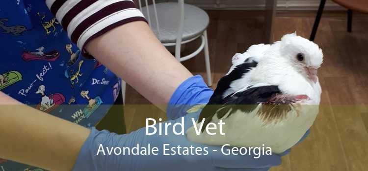 Bird Vet Avondale Estates - Georgia