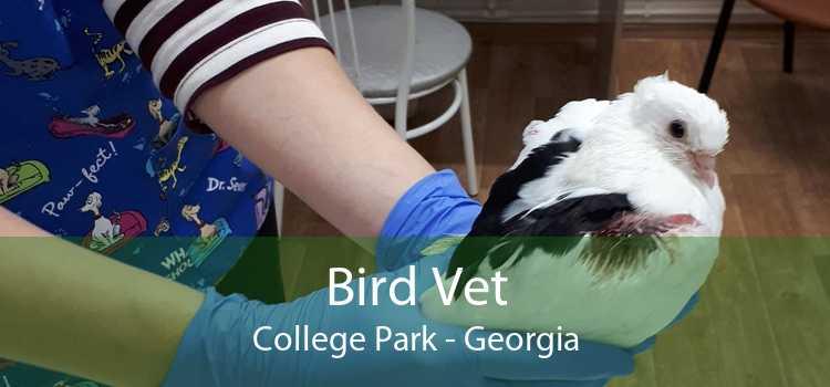 Bird Vet College Park - Georgia