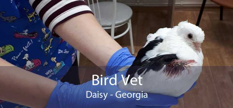 Bird Vet Daisy - Georgia