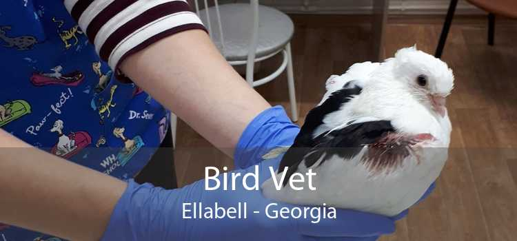 Bird Vet Ellabell - Georgia