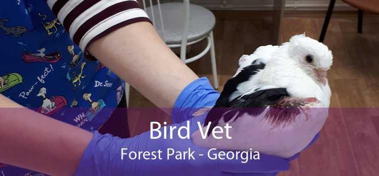 Bird Vet Forest Park - Georgia