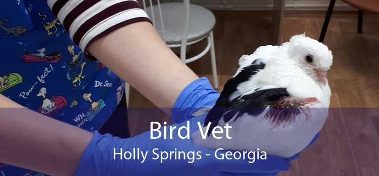 Bird Vet Holly Springs - Georgia