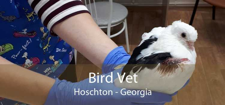 Bird Vet Hoschton - Georgia