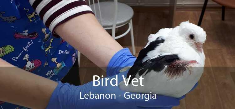 Bird Vet Lebanon - Georgia