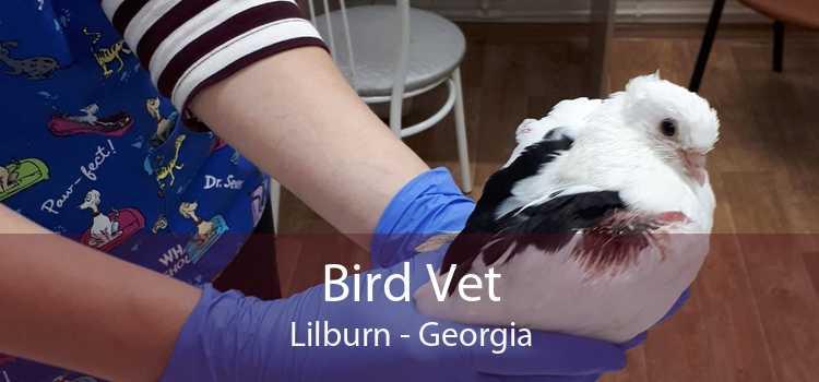 Bird Vet Lilburn - Georgia