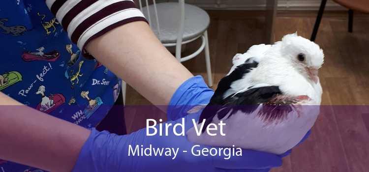 Bird Vet Midway - Georgia