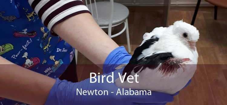 Bird Vet Newton - Alabama