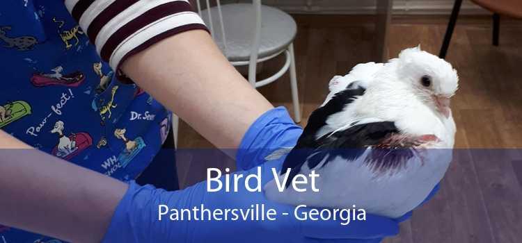 Bird Vet Panthersville - Georgia