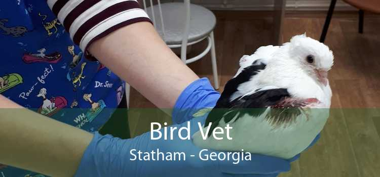 Bird Vet Statham - Georgia