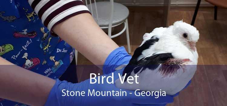 Bird Vet Stone Mountain - Georgia